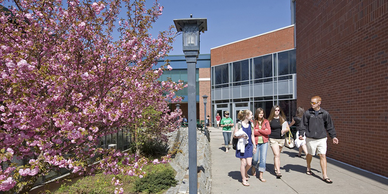 Students walking past blooming tree on campus in spring
